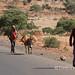 Roadside walk