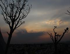 , (jocelynruiz) Tags: sunset paisaje tree shadows orange colors landscape sky