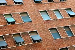 Windows (Apollyon Sun) Tags: rome roma palace building house palazzo finestre windows geometry simmetry