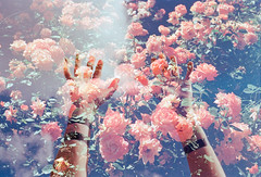 One Last Summer (Hayden_Williams) Tags: flower flowers rose garden natural nature outside pink blue sky clouds warm summer bright hands arms fingers handsintheair doubleexposure multipleexposure film analog analogue vintage hipster indie retro canonae1 fd50mmf18 kodakgold200