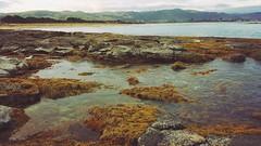 Rock Pool (Ross Major) Tags: rock pool sea ocean water seaweed apollo bay victoria australia galaxys6 gs6