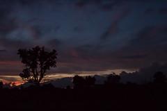 Last Light: Sunset. August 14, 2016. (marylea) Tags: lowlight light sunset aug14 2016 summer sky lastlight blackwalnuttree