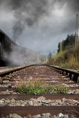 Plants on the Track (AH Photographix) Tags: plants pflanzen schluchsee schwarzwald black forrest germany railroad train stones steine nikon