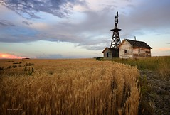 Golden Border (Chris Lakoduk) Tags: abandonedhouse abandonedhomestead abandoned windmill abandonedwindmill farm wheatfarm douglascountywashingtonstate washingtonstate washingtonstatewindmill washingtonstatebarn landscapephotography nikon