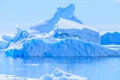 Antarctica-111124-913 (Kelly Cheng) Tags: antarcticpeninsula antarctica pleneaubay pleneauisland blue color colorful colour colourful day daylight horizontal iceberg landscape nature outdoor sea seacape sunny sunshine tourism travel traveldestinations water white
