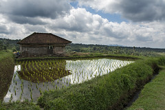 House reflects (Pillg) Tags: reflects reflets rice rizire jattiluwih green vert color couleur bali nature nikon d7100
