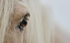 HMM-Letter E - Eye (EbE_inspiration) Tags: macromondays macro lettere thefirstletterofmyname eye horse nikon nikond7100 nikkor white e serene
