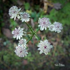 Edinburgh: Royal Botanical Gardens (Jon Fitton) Tags: flower nature royalbotanicgardens olympus edinburgh lightroom flowersplants scotland unitedkingdom gb