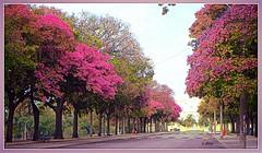Alameda da Quinta da Boa Vista (o.dirce) Tags: quintadaboavista riodejaneiro brasil odirce cidademaravilhosa