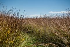 Baldwin Marsh (Phil Roeder) Tags: iowa canon6d canonef70200mmf4lusm jacksoncounty baldwin grass bluesky