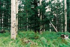 Two Down | 3 (Marc Rodriguez 24) Tags: kodak ektar 100 nikon f3 nikkor 50mm 14 35mm film analog flagstaff arizona pine trees forest woods ferns green nature daylight manualfocus