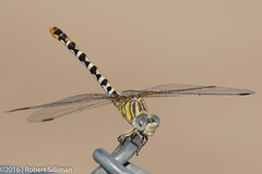 Dragonfly close-up-3054 (rob-the-org) Tags: wti117 yumaaz usmarinecorps f16 300mm 1125sec iso160 cropped noflash