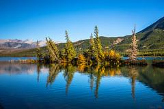 Talbot Lake Reflections (Daniel.Peter) Tags: baum canada herbst kanada see spiegelung talbotlake autumn dpe3x lake reflection tree
