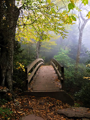 Those who don't believe in magic (gusdiaz) Tags: nature forest blue ridge mountains rough trail adventure fall autummn beautiful magic magical hermoso naturaleza beautifl amazing bridge leaves leaf hojas colorful colorido