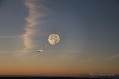 Lune particulire... ( P-A) Tags: lunedesfeuilles lunedeschasseurs lunedesmoissons superlune luneparticulire ciel trange diffrent nature photos simpa nikonflickraward lunedoctobre