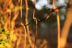 photo of the day  day 5 (_sydneyjones) Tags: fence wire lighting blurred perspective photography focus pointe