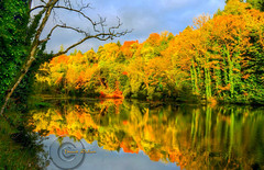 Autumn reflections. (Edward Dullard Photography. Kilkenny, Ireland.) Tags: kilkenny ireland eire leinster oldpicturesofkilkenny oldphotographsofkilkenny oldkilkennyphotos oldkilkenny edwarddullardphotography kilkennypeople autumn fall herbst nature landscape
