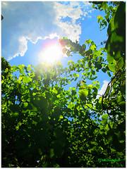 Cloud, Sun & Tree (Stephenie DeKouadio) Tags: canon photography outdoor painting tree trees sky clouds cloud sun branches art beautiful beauty green blue blueandgreen light darkandlight summer
