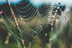 (m.majphoto) Tags: nature vsco natural naturephoto drops droplets spiderweb web meadow dew waterdrops waterdroplets