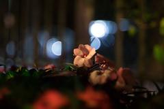 IMG_4116 (Lens a Lot) Tags: paris | 2016 fujinon ebc 50mm 14 6 blades m42 f14 flower bokeh depth field color yellow green white vintage manual japanese prime lens extrieur profondeur de champ fleur plante