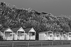 Pampas Grass Explosion (Cooden Phil) Tags: pampasgrass beachhuts beach shore seaside blackandwhite bw cp2016 fuji x100s coodenbeach bexhill eastsussex england