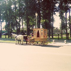 Coach (lubovphotographer) Tags: horseandpeople street horses coach suzdal exibition walking smartphonephotography smartphonephot smartphonephoto smartphone smartph smartphot goodshot photo photography photographylovers picturethis 2016      flyeranano9      ex