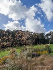 Clyne Gardens 2016 09 30 #13 (Gareth Lovering Photography 3,000,594 views.) Tags: clyne gardens botanical swansea wales flowers trees shrubs park olympus stylus1s garethloveringphotography