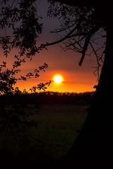 Ved tret (Kent 40D) Tags: solnedgang have trer sol aften hjemme skuderlse silhouet skygger