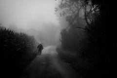 The morning walk. (Nicolas Winspeare) Tags: xt1 bw countryside dog fog fuji landscape lane lonely path street walking