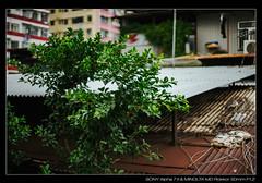 DSC09344 (YKevin1979) Tags: hongkong  yaumatei yaumateiwholesalefruitmarket   sony ilce7m2 a7ii a7m2 minolta rokkor manualfocus  md 50mm 50 f12 bokeh