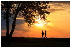286/366 (Leandro Martinez) Tags: evening run running tree bright wild landschaft