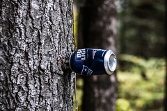 Can on Tree (Merrill_Sampson_Fotography) Tags: art is bread cheap forest woods vermont let me take your foto dot com tree trees happy model
