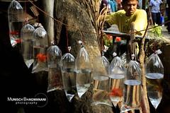 FISH SELLER (Munisch) Tags: morning travel light india fish color water canon geotagged photography eos rebel photo focus asia plastic 1855mm kolkata seller hung stillphotography 550d t2i galifstreet