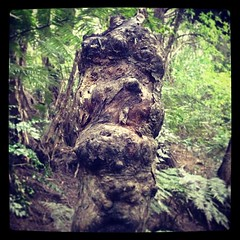 Totemic face. (clerestories) Tags: square squareformat iphoneography instagramapp uploaded:by=instagram