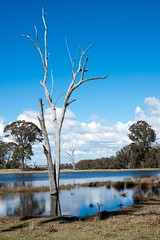 Woodville top dam_0149.jpg (ImaginingsLifeImages) Tags: grass scenes australia reflections floraandfauna rural woodville northerntablelands dam farmland reeds flora nature newengland nsw farm armidale water places armidaleregion