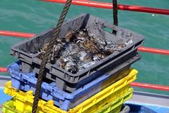 DSCF1466 (Jc Mercier) Tags: pche retourdepche fishermen marins cancale