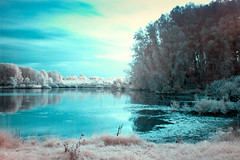 Infrared landscape (Vialuna) Tags: infrared ir russia nature