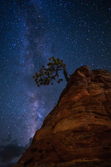 "The ""One"" Tree (Eric Gail: AdventuresInFineArtPhotography) Tags: ericgail 21studios canon explore interesting interestingness photoshop lightroom nik software landscape nature infocus adjust photo photographer cs6 topazlabs picture utah zion tree beehive nightscape milky way milkyway 6d"
