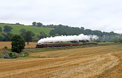 Lizzie storming through Onibury (Andrew Edkins) Tags: 6201 princesselizabeth princessroyal onibury welshmarches shropshire england uksteam mainlinesteam cathedralsexpress railtour charter geotagged railwayphotography field landscape
