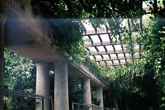 Pergola (flolarey) Tags: pergola garden wroclaw plants