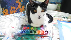 Astrid is mostly helping (KristinVictoria) Tags: studio cat colours create creating colors colour color art artist artistic based arizona az from washington wa desert life water white watercolor watercolour watercolors watercolours wash washes tuxedo kitten drop cloth painting paint pallet painted
