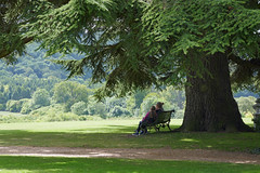Visitors enjoying a rest under a massive tree - Highclere Castle (Monceau) Tags: highclerecastle bench visitors resting massive tree grounds park