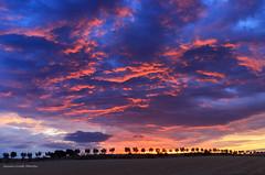 Colours Storm (Antonio Ciriello) Tags: circummarpiccolo taranto puglia apulia italia italy alberi trees landscapes paesaggi colours colors colori nuvole clouds wind vento canoneos600d canon eos600d 600d rebelt3i tamron tamron1750 1750 nature natura ngc