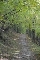 DSC_0075 (North Country Trail) Tags: sheyenne stateforest northdakota hiking