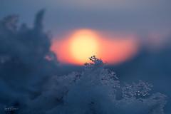Cool World (Ian McGregor Photography) Tags: abstract april canada d800 ianmcgregor nikon photography saskatchewan sunrise winter frozen ice nature snow rokeby ca