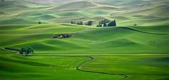 Colfax wheat field, Washington , Spring colour ( In explore October 9, 2016) (christinachui79) Tags: topphotosof2016 flickr tranquil field hill sunrise light palouse wheatland green landscape nature