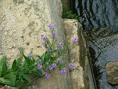 541 (jHc__johart) Tags: garden arboretum opksarboretum kansas opagc rocks stream