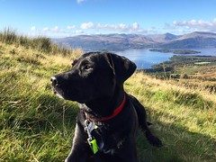 Posing Pepper (lewi1553) Tags: girlsbestfriend mansbestfriend dogsinlandscape scenery views conichill scotland landscape pet dog