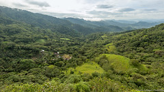 17. Matagalpa-6.jpg (gaillard.galopere) Tags: 2016 5d 5dmkiii apn america amrique canon continentsetpays couleur ef eos mkiii matagalpa ni nic nicaragua travel vegetations ameriquecentrale anne arboles arbre arbres cafe caf canonphotography color colorful forest foret fort green hood tree trees verde vert wood