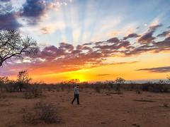 IMG_8531.jpg (carelstassen) Tags: krugerpark mpumalanga southafrica